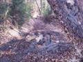ATV50Rで林道を攻める